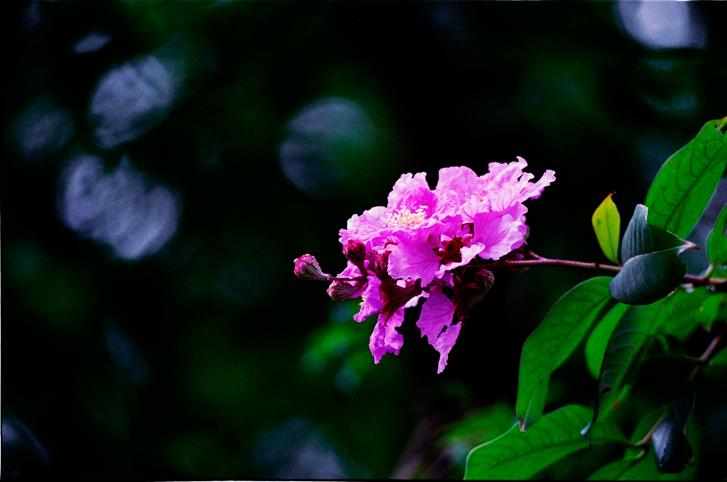 Hoa Bằng Lăng Nở Muộn - Đinh Thị Ngọc Anh